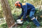 Balnarring Tree cutting services 21