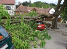 Kwikfynd Tree Cutting Services balnarring