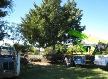 Kwikfynd Tree Management Services balnarring