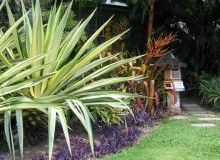 Kwikfynd Tropical Landscaping balnarring