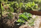 Balnarring Vegetable gardens 2