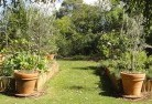 Balnarring Vegetable gardens 3