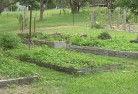 Balnarring Vegetable gardens 5