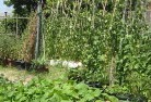 Balnarring Vegetable gardens 6